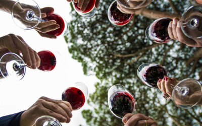 Wine tasting – Accessible tour – Lombardy