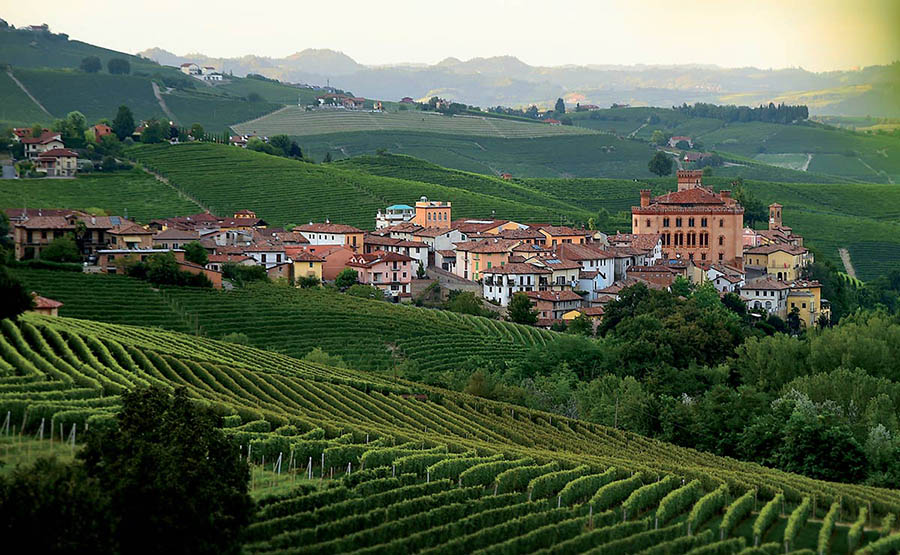 ACCESSIBLE WINE TASTING EXPERIENCE – PIEDMONT