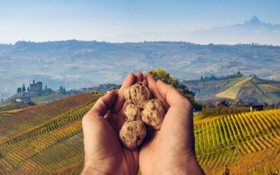 In Italy, the 91st edition of the international accessible Alba white truffle festival