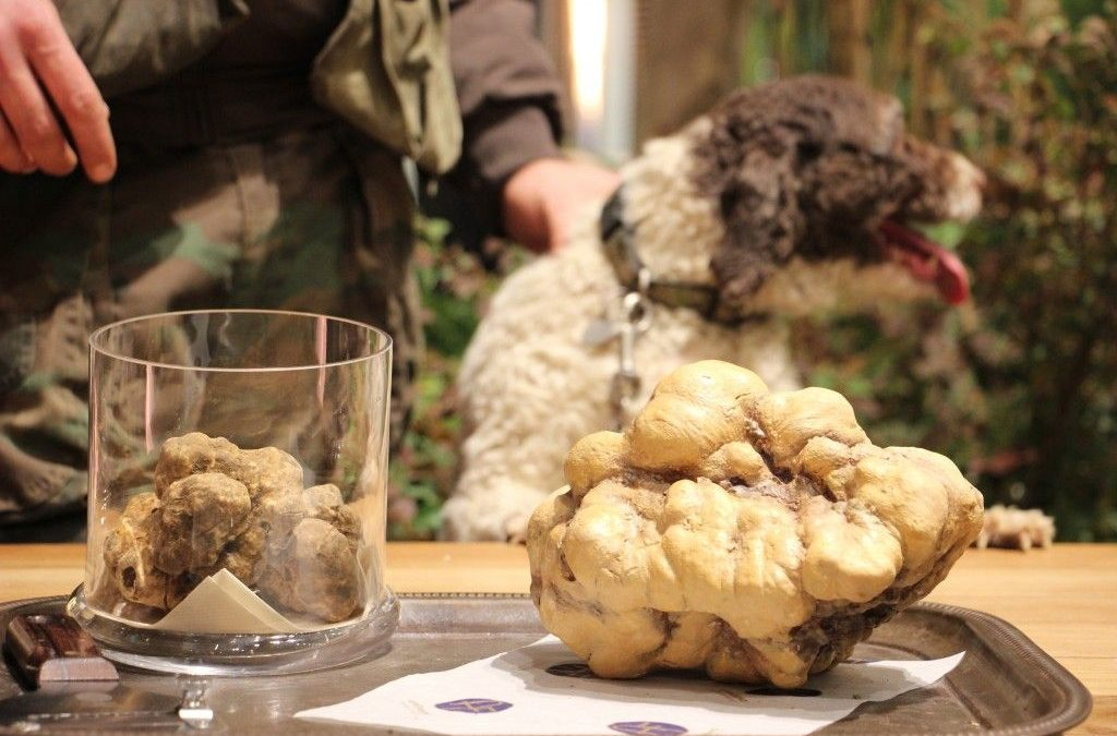 "Emilia-Romagna's white truffle festival: ""Tartufesta"""