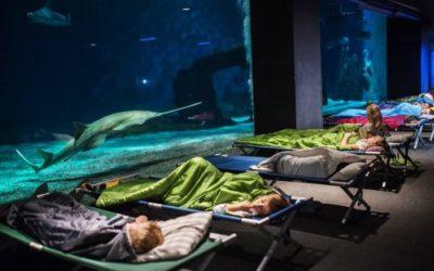 A night with sharks at the Genoa aquarium
