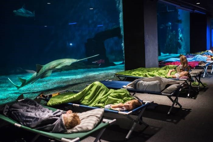 A night with sharks at the Genoa aquarium