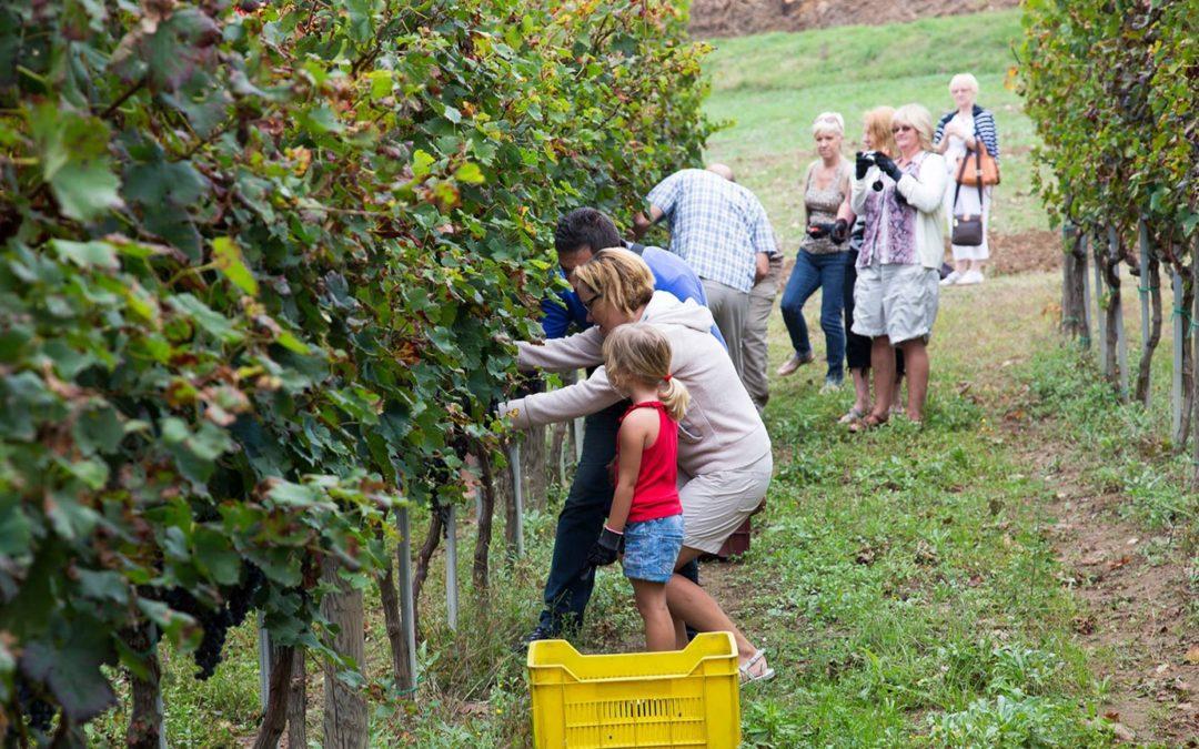 Harvest Tour
