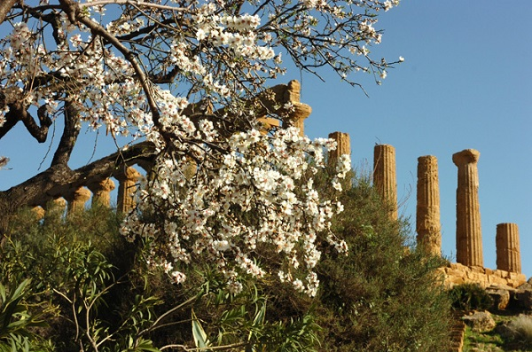 2020 Almond Blossom Fest in Sicily