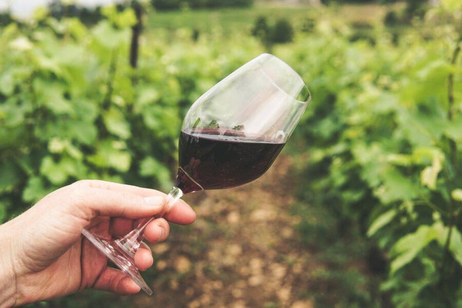 WINE TASTING EXPERIENCE – SICILY